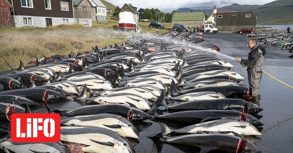 Δανία: Κατακραυγή για την σφαγή σχεδόν 1.500 δελφινιών στα νησιά Φερόε