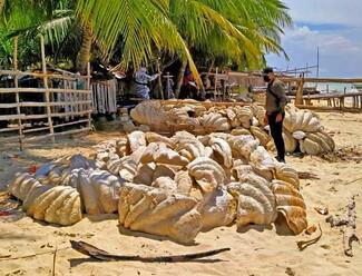 Φιλιππίνες: Κατασχέθηκαν γιγάντιες αχιβάδες με αξία σχεδόν 25 εκατ. δολάρια