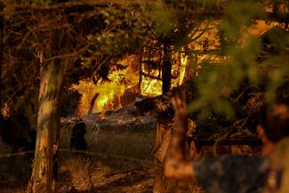 Φωτιά στην Αχαΐα: Ολονύχτια μάχη με τις φλόγες- Τραυματίες και καμμένα σπίτια